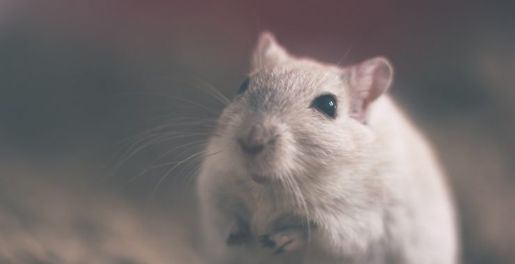 What Do I Need To Know About Pest Control In My Building?